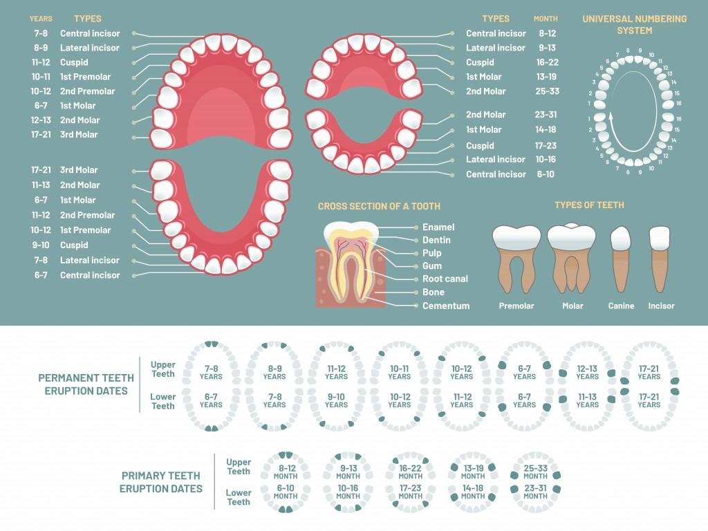 Sets of teeth 1024x768 1